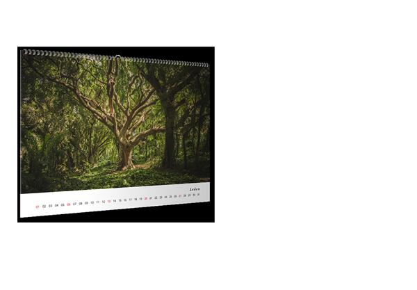 Kalendář nástěnný měsíční 2019